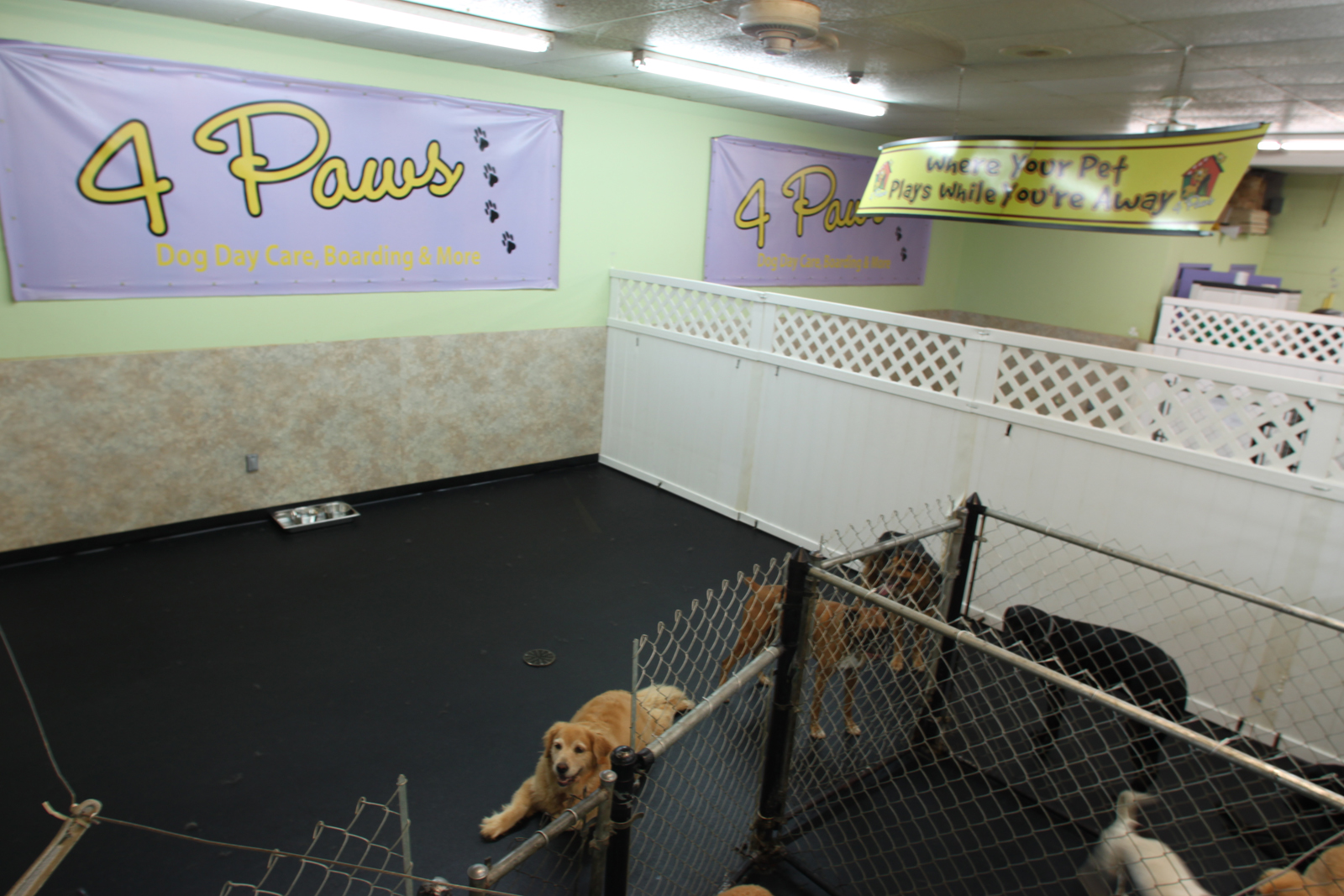 Spartanburg, South Carolina, Greenville, Dog, Pets, Doggy Day Care, Dog Boarding, 4 Paws